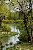 Nature park in spring. A small stream flows into a lake with vegetation on both sides. a tall branching tree stands in the foreground royalty free stock photo