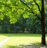 The nature in the Park. Trees and shrubs in the Park summer Royalty Free Stock Photography