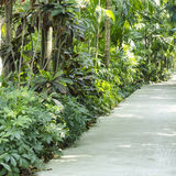 Nature Passage with many trees Royalty Free Stock Image