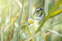 Nature pastel concept. Beautiful Butterfly and flowers meadow background.  stock photo