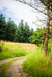 Nature path. Path in beautiful nature surroundings Royalty Free Stock Photography