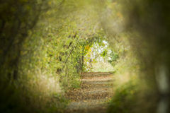 Nature Path Stock Photography