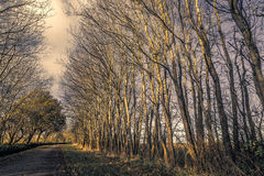 Nature path in a dark forest in the fall. Nature path in a dark forest in the late autumn Stock Images