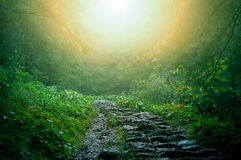 Nature. Path in dark green old forest Royalty Free Stock Photo