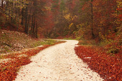 Nature path through red leaves Royalty Free Stock Photos