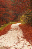 Nature path through red leaves Royalty Free Stock Image