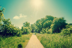 Nature path Stock Image