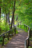Nature path Royalty Free Stock Photo