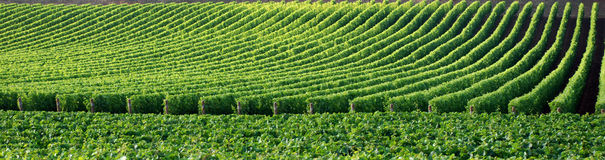 Nature pattern. Pictures of plants that create a natural pattern. Picture taken in tuscany (Italy royalty free stock image