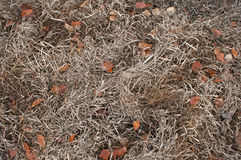 Nature pattern background. Dry grass nature background. Top view autumn grass. Original nature pattern background. Dry orange brown grass and leaves on ground Royalty Free Stock Photos