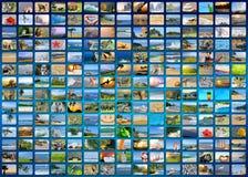 Nature photo (animal, landscape, beach) Stock Photos