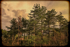 Nature photo landscape, grunge vintage photography with grain. Stock Photography