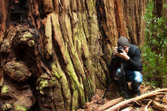 Nature Photographer. A nature photographer sets up a shot in the forest Stock Images