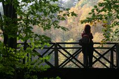 Nature photographer. On bridge. Female photographer. Photographer and autumn royalty free stock images
