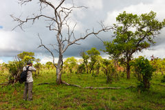 Nature photographer. Taking photos of giraffe on safari in Tanzania Africa Royalty Free Stock Photography