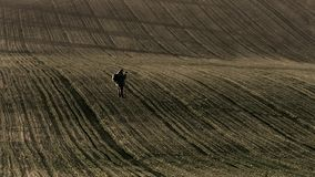 Nature photographer walking on a field looking for a good point stock footage