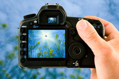 Nature Photography. An image on the camera of a photographer clicking the sun and flowers Stock Image
