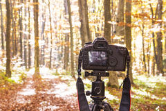 Nature Photography. Professional Camera on a Tripod Taking Nature and Forest Photography Stock Photos
