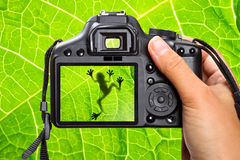 Nature photography. Photography of the tree frog Stock Photo