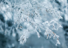 Nature photography winter background Royalty Free Stock Photography