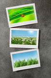 Nature photos in  frames Stock Images