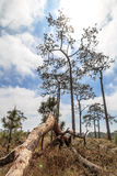 Nature in Phukradueng Stock Photography