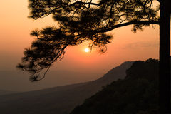 Nature in Phukradueng. Sunset behind the silhouetted branch of pine tree at Pha Makdook cliff in Phukradueng national park of Loei province, Thailand royalty free stock photos