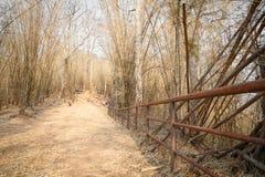 Nature in Phukradueng Stock Photo