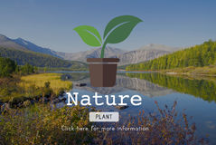 Nature Plant Ecology Environmental Conservation Concept Stock Photos