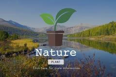 Nature Plant Ecology Environmental Conservation Concept Stock Photos