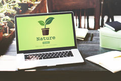 Nature Plant Ecology Environmental Conservation Concept Stock Photo
