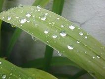 Nature Plant stock photos