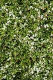 Nature - plantes, fleurs et fruits Photo libre de droits