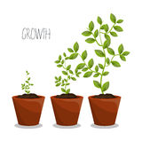Nature plants growth Royalty Free Stock Photo