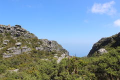 Nature, plants, shrubs, vegetation, rocks on top of Table Mountain National Park, cape town south africa travel. Path in a national park just outside of Cape royalty free stock photography