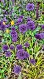 Nature. Poland spring garden Royalty Free Stock Photography