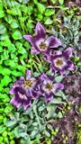 Nature. Poland spring garden Stock Images