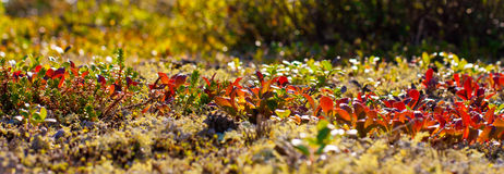 Nature of the polar region in the autumn Stock Image