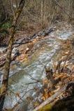 Nature polution Stock Image