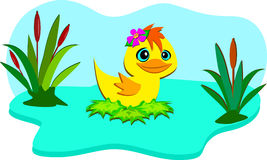 Nature Pond with Cute Duck Royalty Free Stock Image
