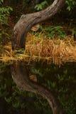 Nature portraits Royalty Free Stock Photo