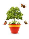Nature in a pot. Isolated pot with grass, flowers, tree  and butterflies Royalty Free Stock Image
