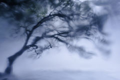 Nature power. Tree shaking because of the water power Royalty Free Stock Photo
