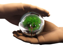 Nature preservation. Illustration of hands holding tree enclosed in glass globe; good image for symbol of environmentalism and conservation Royalty Free Stock Photo