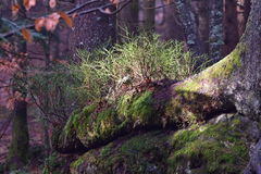 Nature of primeval forest Stock Image