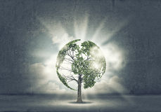 Nature protection. Green tree as a symbol of environmental protection Stock Images