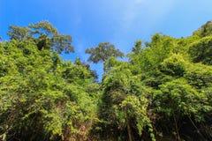 Nature pure à la réserve naturelle d'Umphang, Tak Province, Thaïlande du nord-ouest image libre de droits