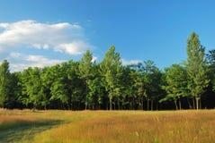 Nature pure dans la lumière de coucher du soleil Images libres de droits