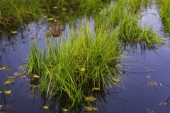 Nature purity grass on the lake bank. Stock Photos
