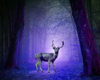 Nature, Purple, Darkness, Light Royalty Free Stock Images